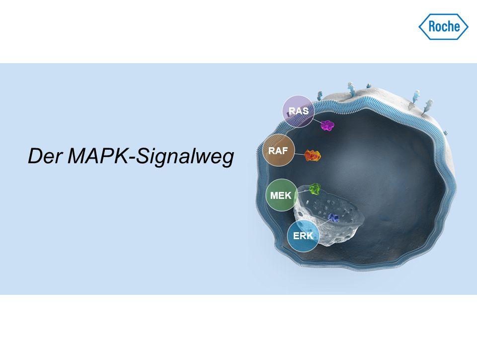 Der MAPK-Signalweg