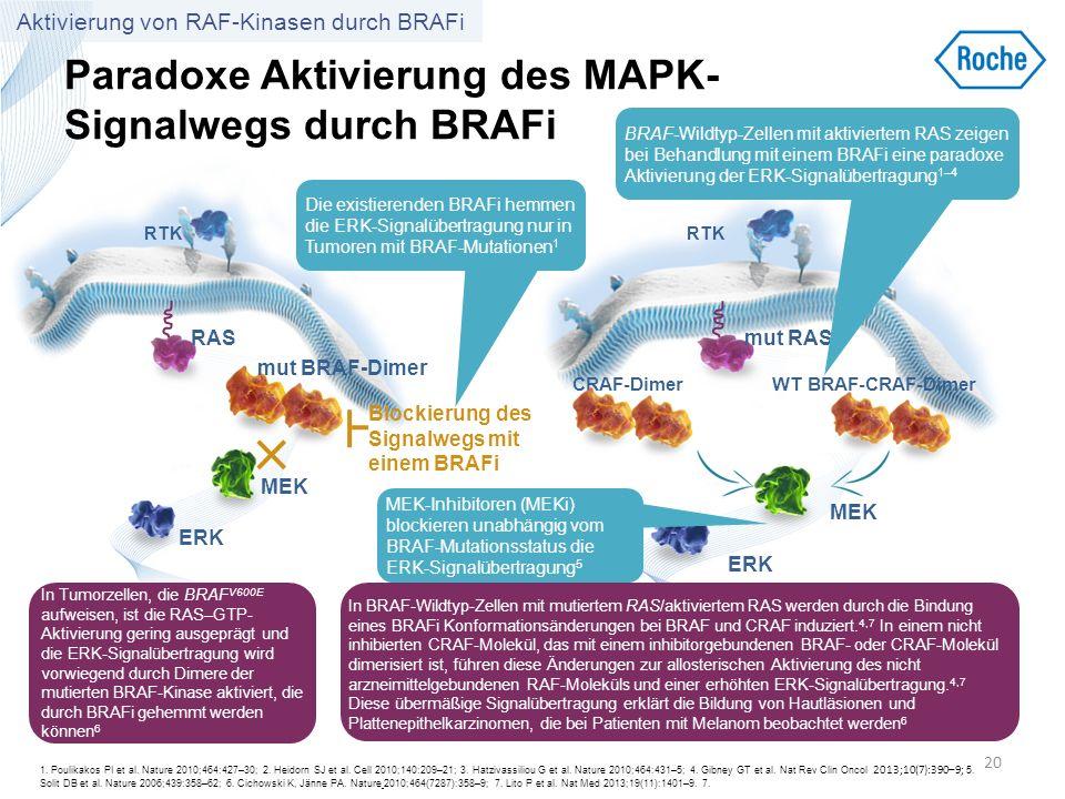 Paradoxe Aktivierung des MAPK-Signalwegs durch BRAFi