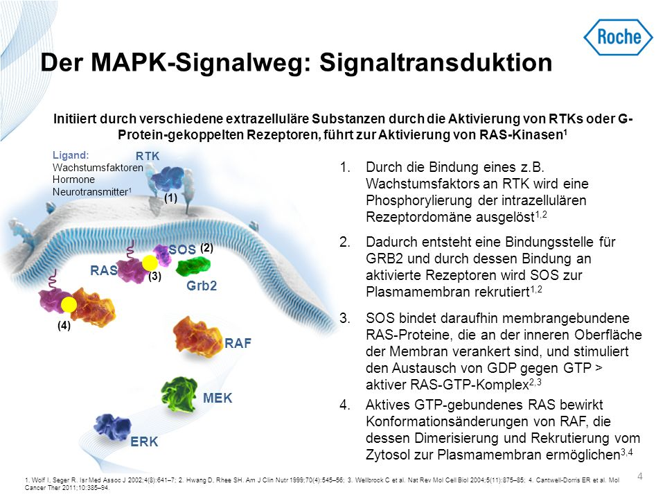 Der MAPK-Signalweg: Signaltransduktion