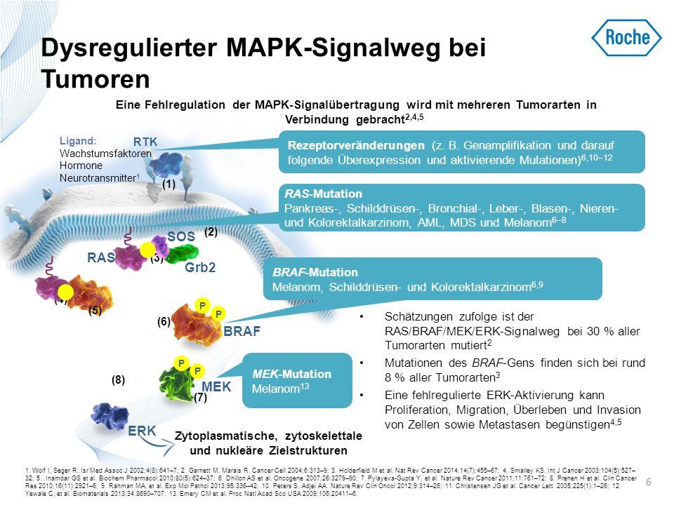 Dysregulierter MAPK-Signalweg bei Tumoren