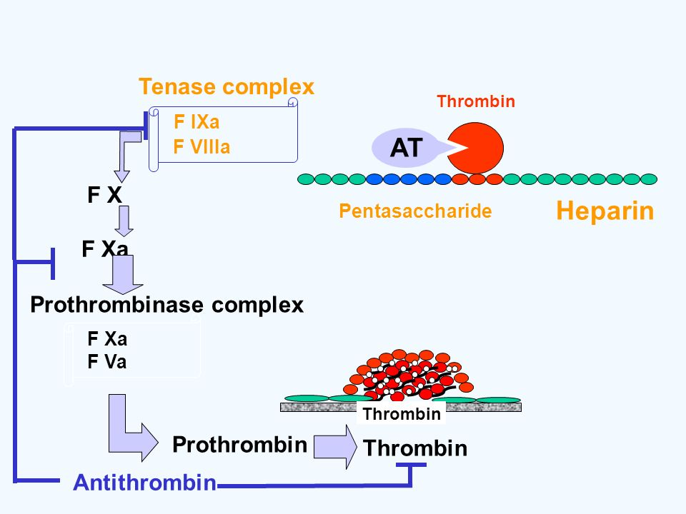 AT Heparin Tenase complex F X F Xa Prothrombinase complex Prothrombin