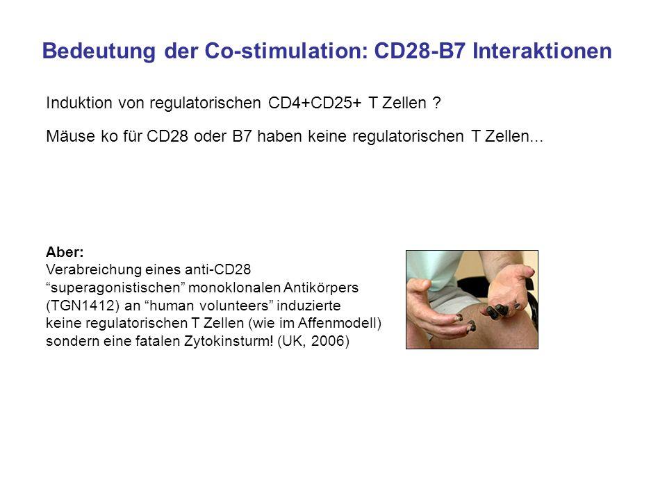 Bedeutung der Co-stimulation: CD28-B7 Interaktionen