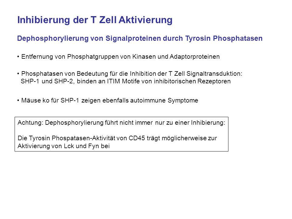 Inhibierung der T Zell Aktivierung