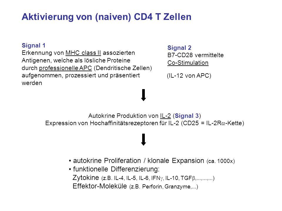 Aktivierung von (naiven) CD4 T Zellen