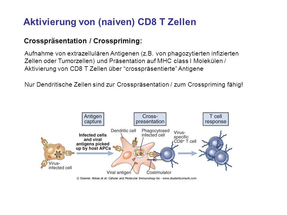 Aktivierung von (naiven) CD8 T Zellen