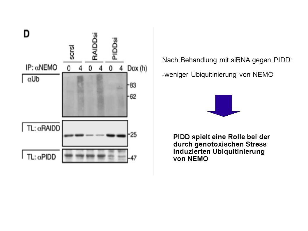 Nach Behandlung mit siRNA gegen PIDD:
