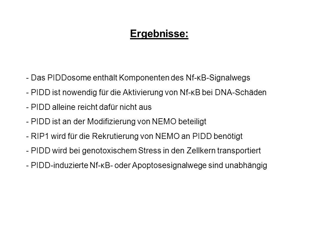 Ergebnisse: - Das PIDDosome enthält Komponenten des Nf-κB-Signalwegs
