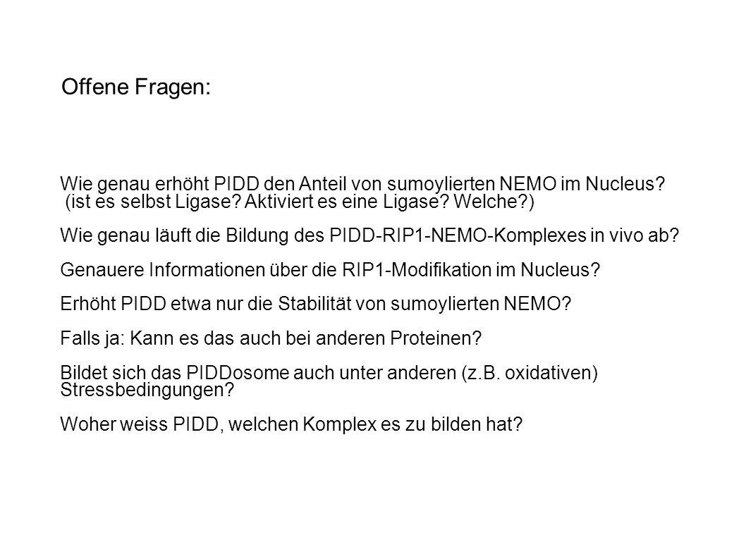 Offene Fragen: Wie genau erhöht PIDD den Anteil von sumoylierten NEMO im Nucleus (ist es selbst Ligase Aktiviert es eine Ligase Welche )