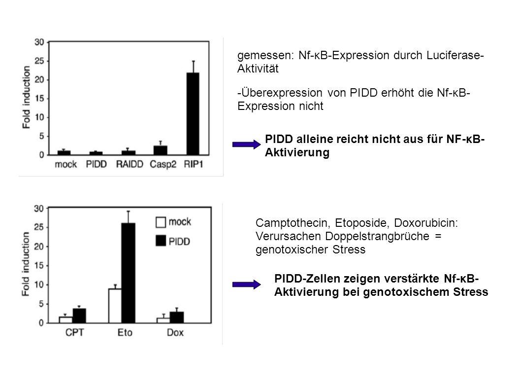 gemessen: Nf-κB-Expression durch Luciferase-Aktivität