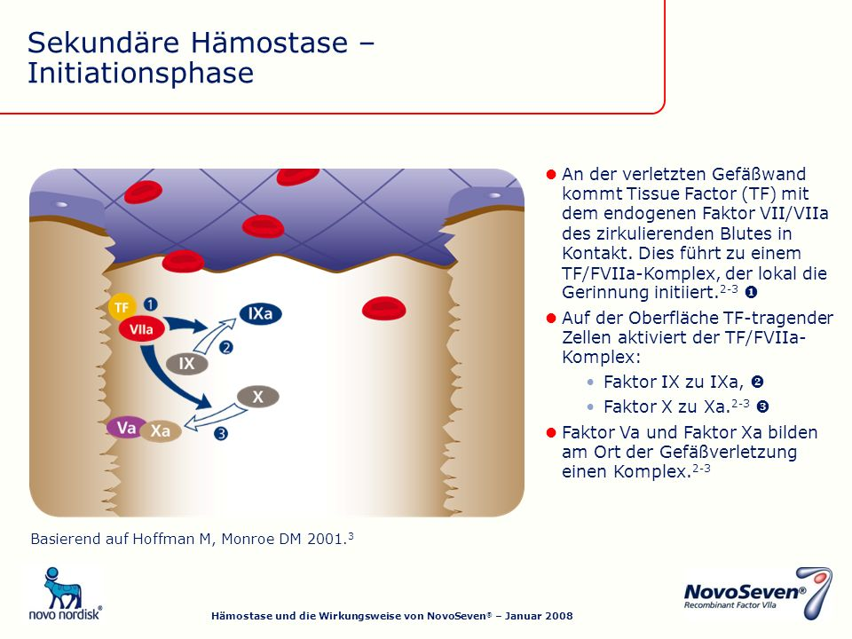 Sekundäre Hämostase – Initiationsphase