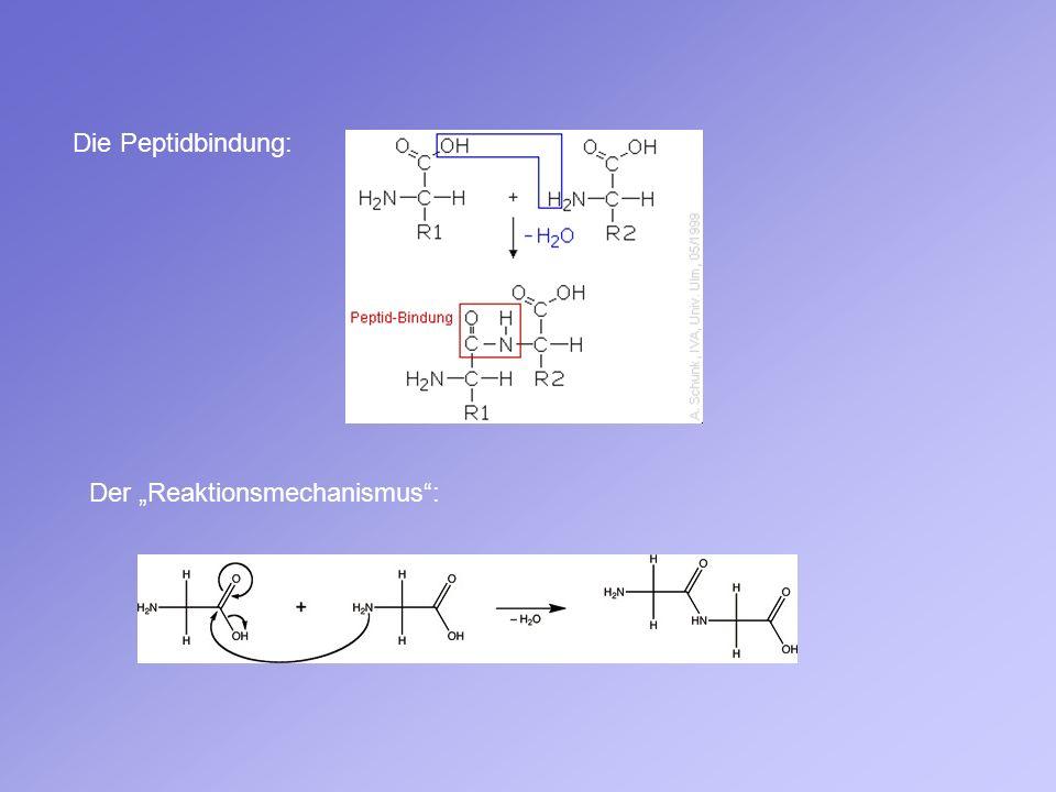 """Die Peptidbindung: Der """"Reaktionsmechanismus :"""
