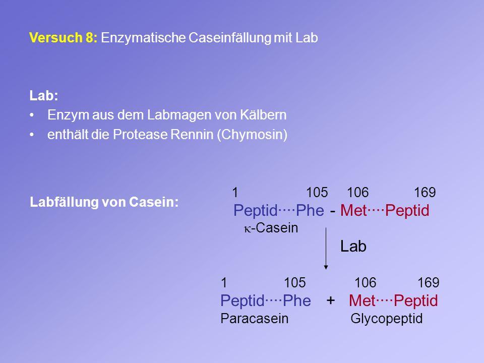 Peptid····Phe - Met····Peptid Lab