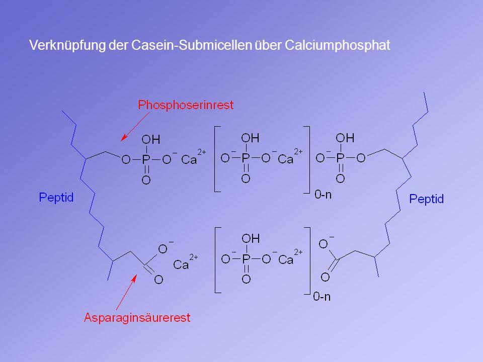 Verknüpfung der Casein-Submicellen über Calciumphosphat