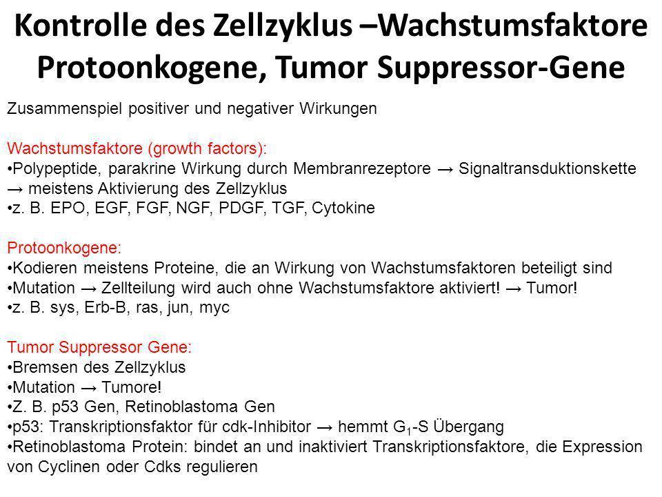 Kontrolle des Zellzyklus –Wachstumsfaktore Protoonkogene, Tumor Suppressor-Gene