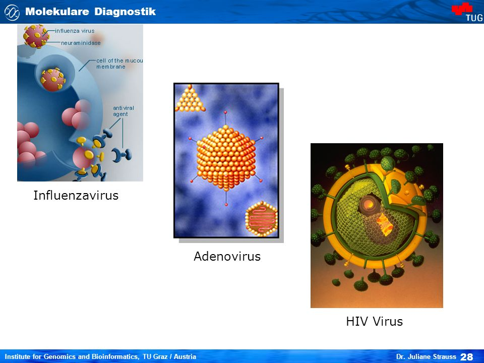 Influenzavirus Adenovirus HIV Virus