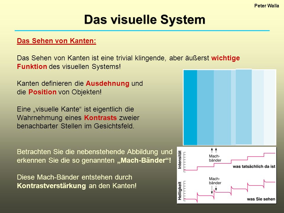 Das visuelle System Das Sehen von Kanten: