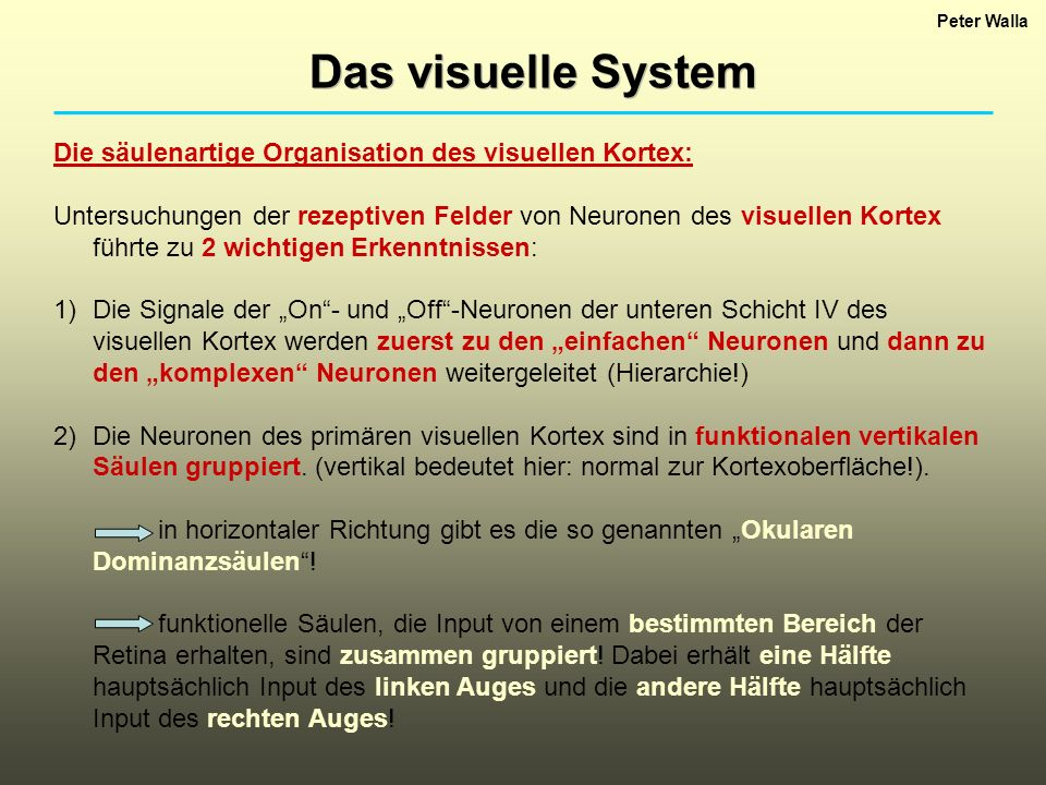Peter Walla Das visuelle System. Die säulenartige Organisation des visuellen Kortex: