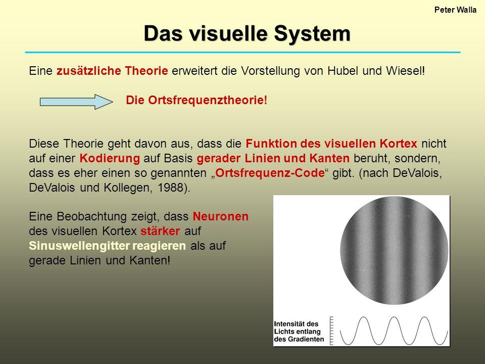 Peter Walla Das visuelle System. Eine zusätzliche Theorie erweitert die Vorstellung von Hubel und Wiesel!