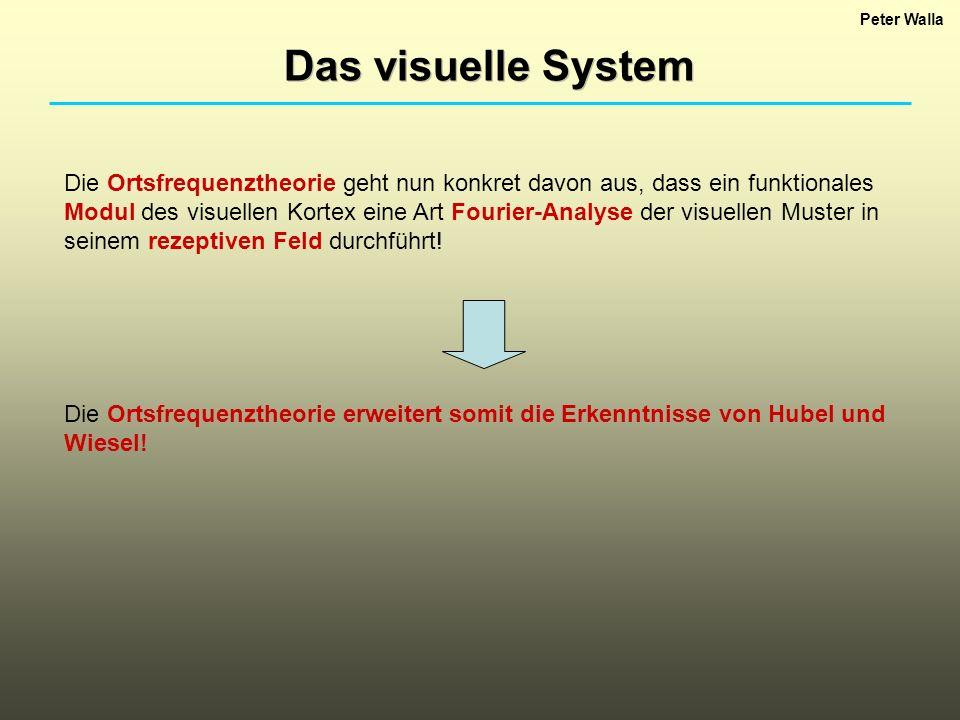 Peter Walla Das visuelle System.