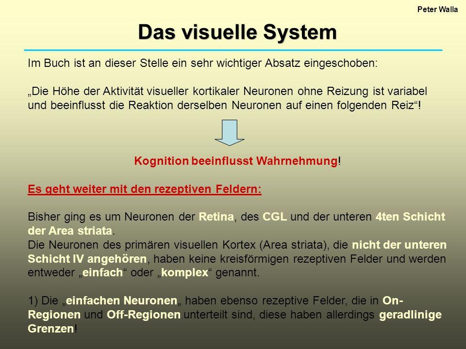 Peter Walla Das visuelle System. Im Buch ist an dieser Stelle ein sehr wichtiger Absatz eingeschoben: