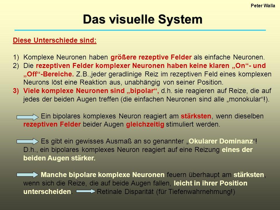 Das visuelle System Diese Unterschiede sind: