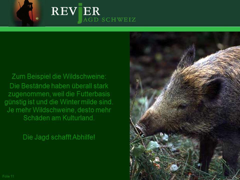 Zum Beispiel die Wildschweine: