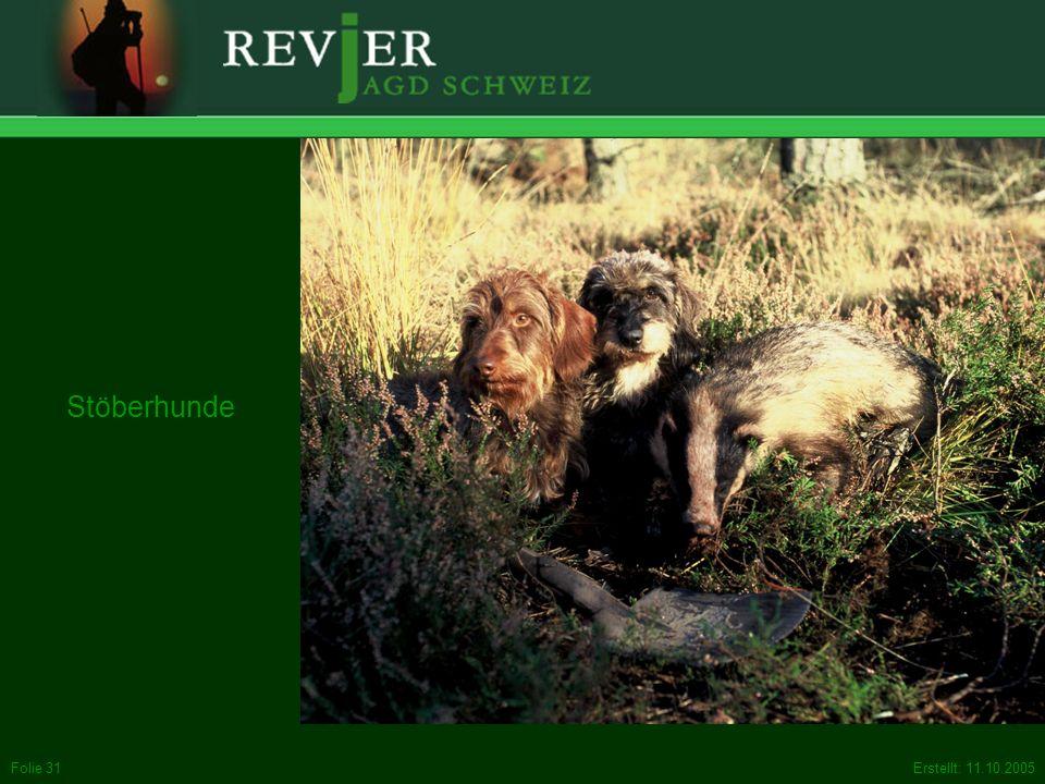Stöberhunde Stöbern: Sie helfen bei der Bewegungsjagd den Treibern, das versteckte Wild auf die Läufe zu bringen.