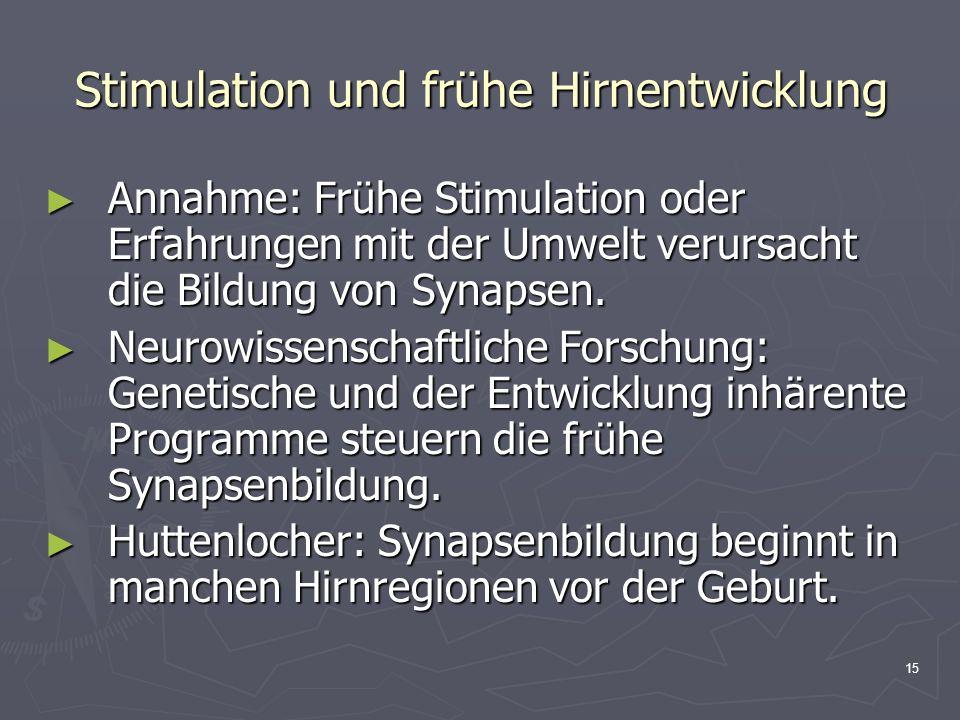 Stimulation und frühe Hirnentwicklung