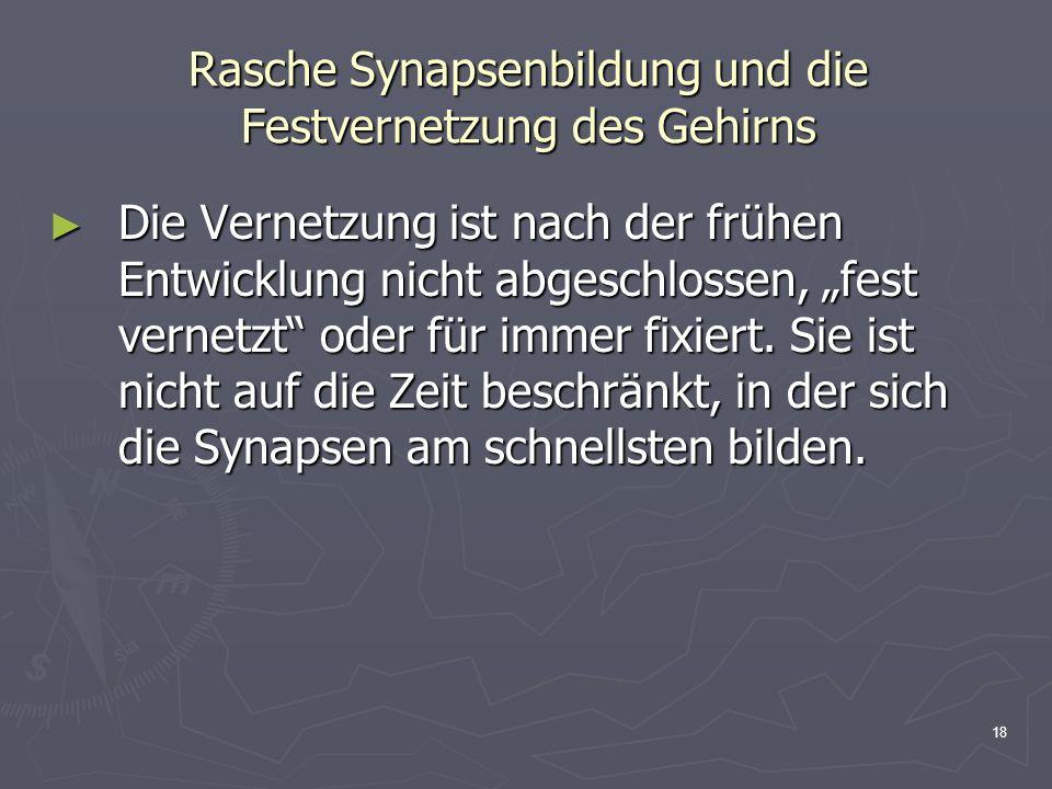 Rasche Synapsenbildung und die Festvernetzung des Gehirns