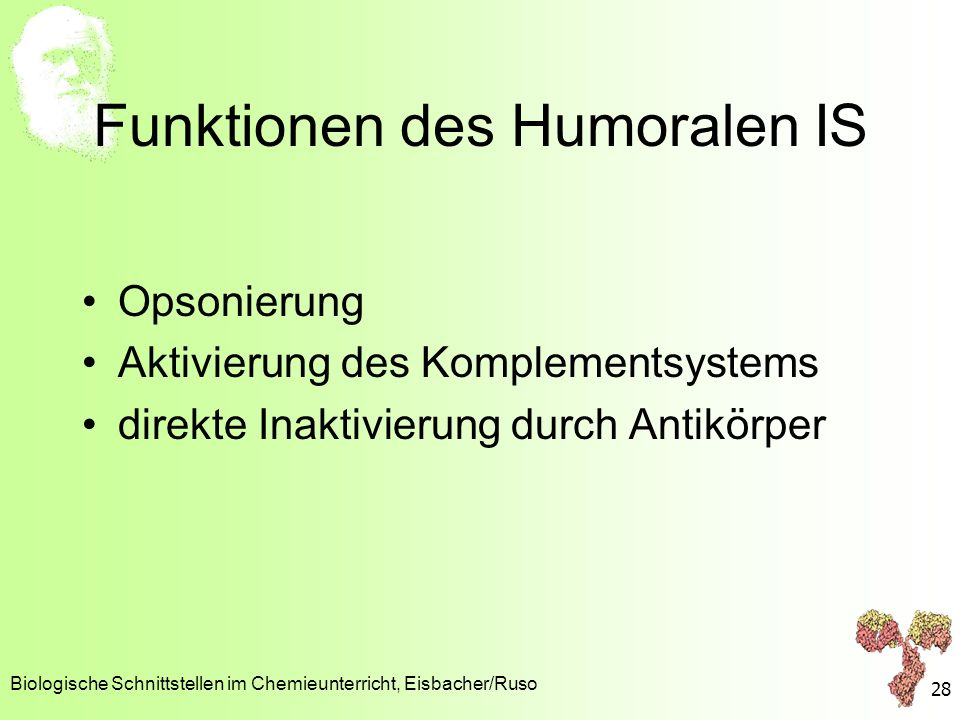 Funktionen des Humoralen IS