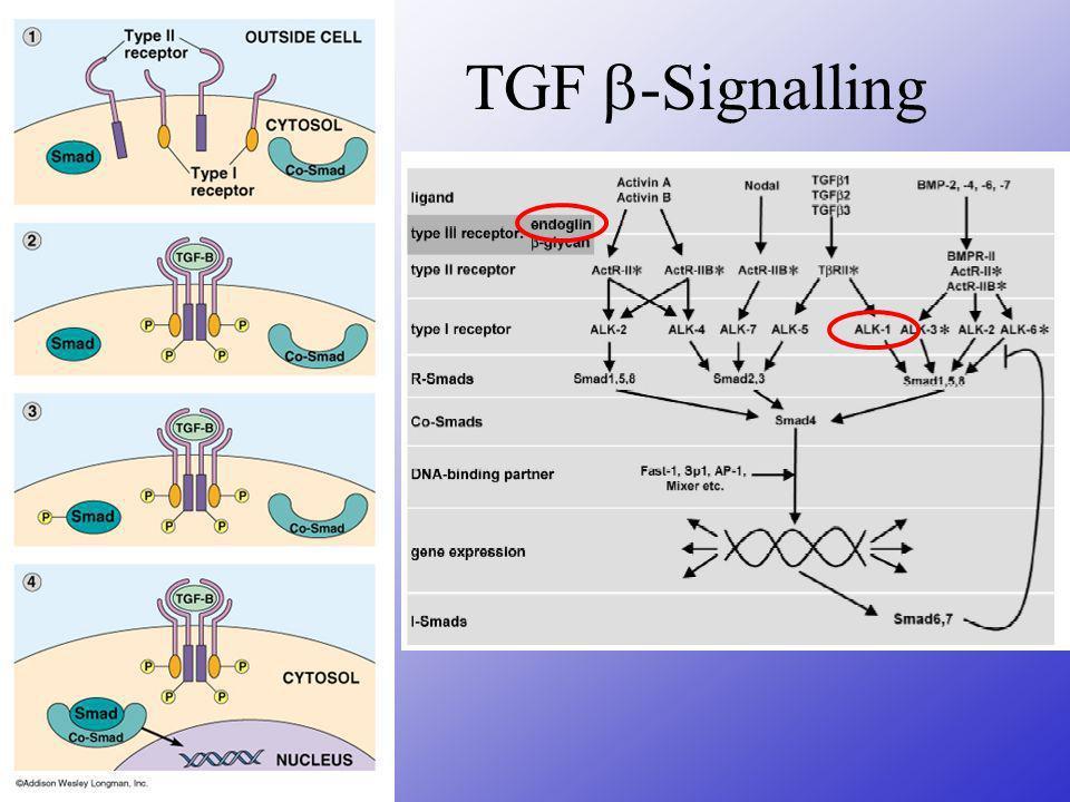 TGF-Signalling