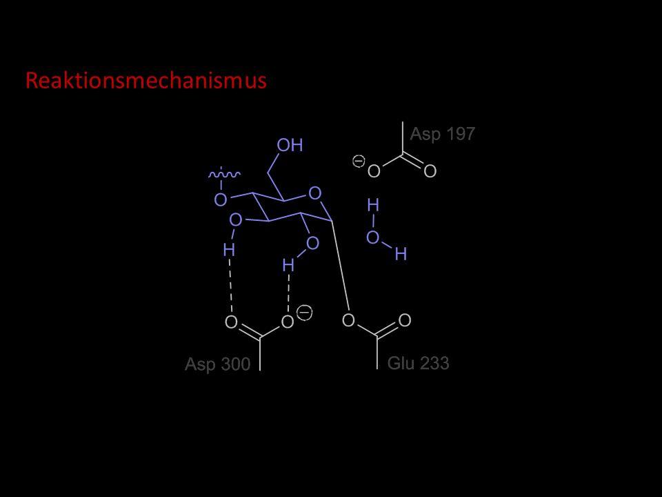 Reaktionsmechanismus