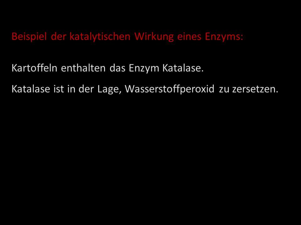 Beispiel der katalytischen Wirkung eines Enzyms: