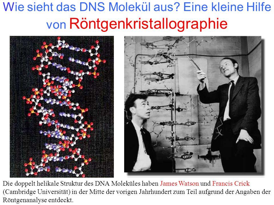 Wie sieht das DNS Molekül aus