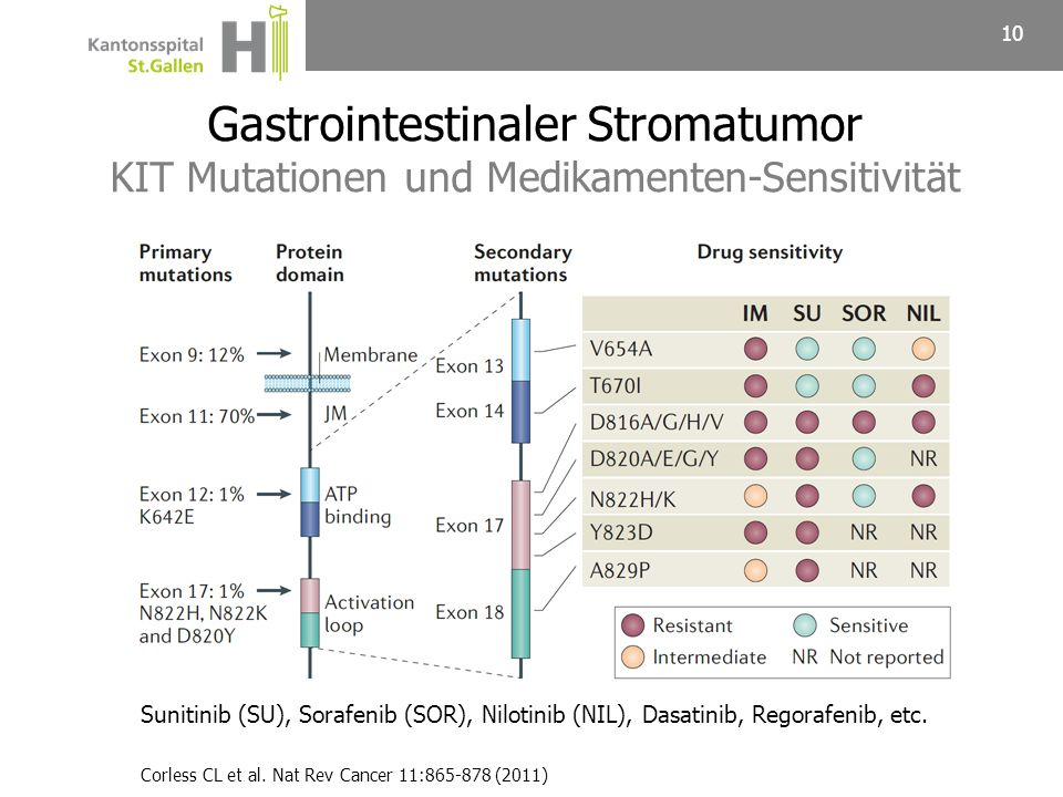 Gastrointestinaler Stromatumor KIT Mutationen und Medikamenten-Sensitivität