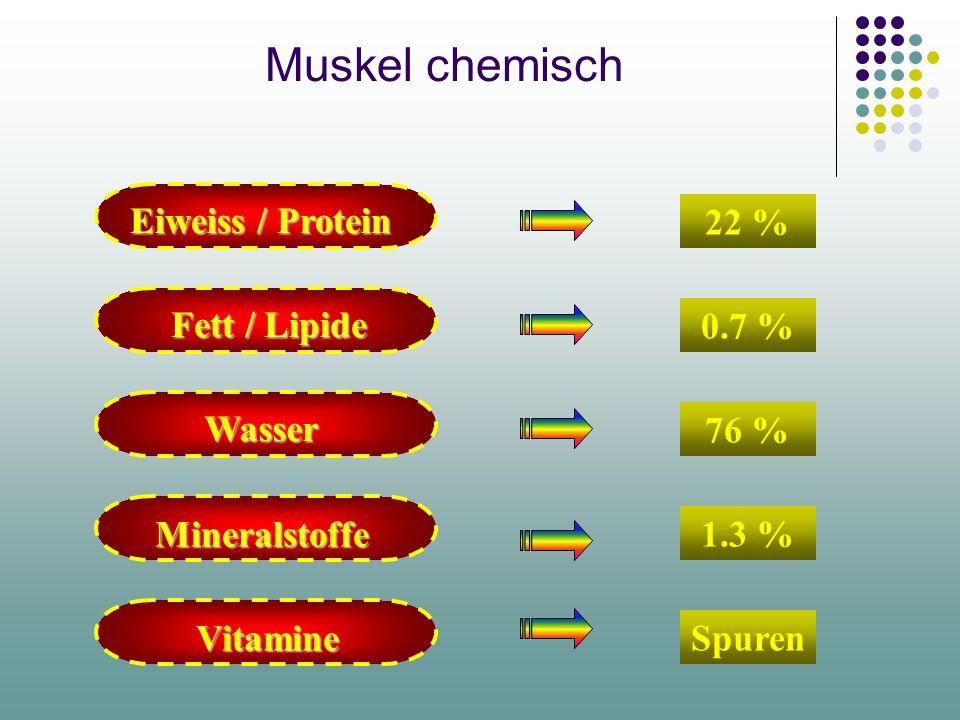 Muskel chemisch Eiweiss / Protein 22 % Fett / Lipide 0.7 % Wasser 76 %