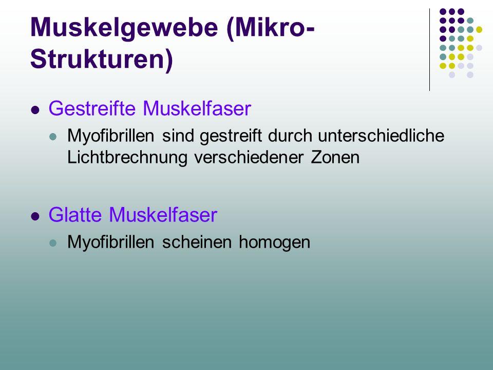 Muskelgewebe (Mikro-Strukturen)