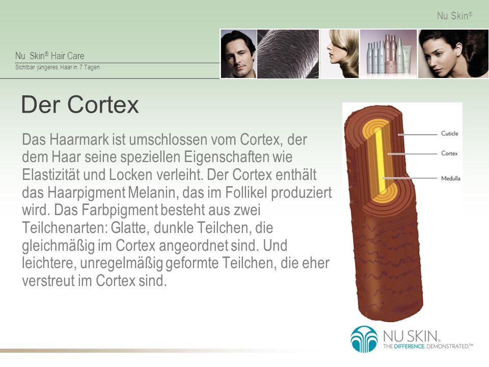 Der Cortex