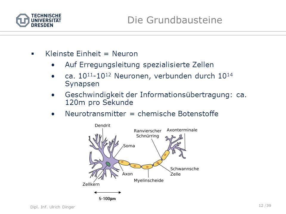 Die Grundbausteine Kleinste Einheit = Neuron