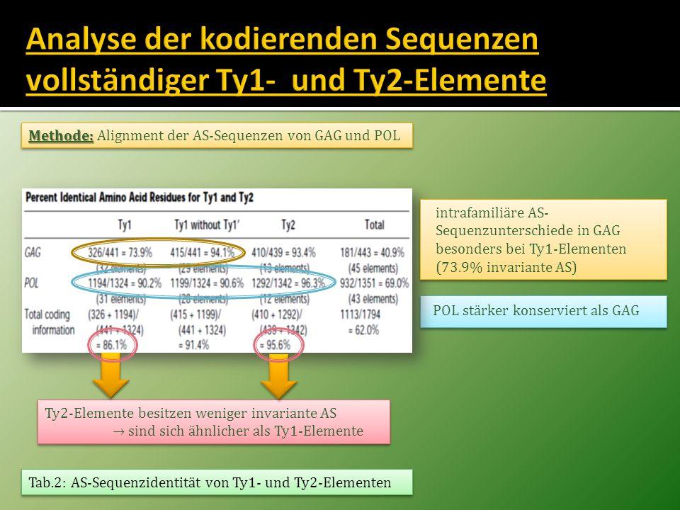 Analyse der kodierenden Sequenzen vollständiger Ty1- und Ty2-Elemente
