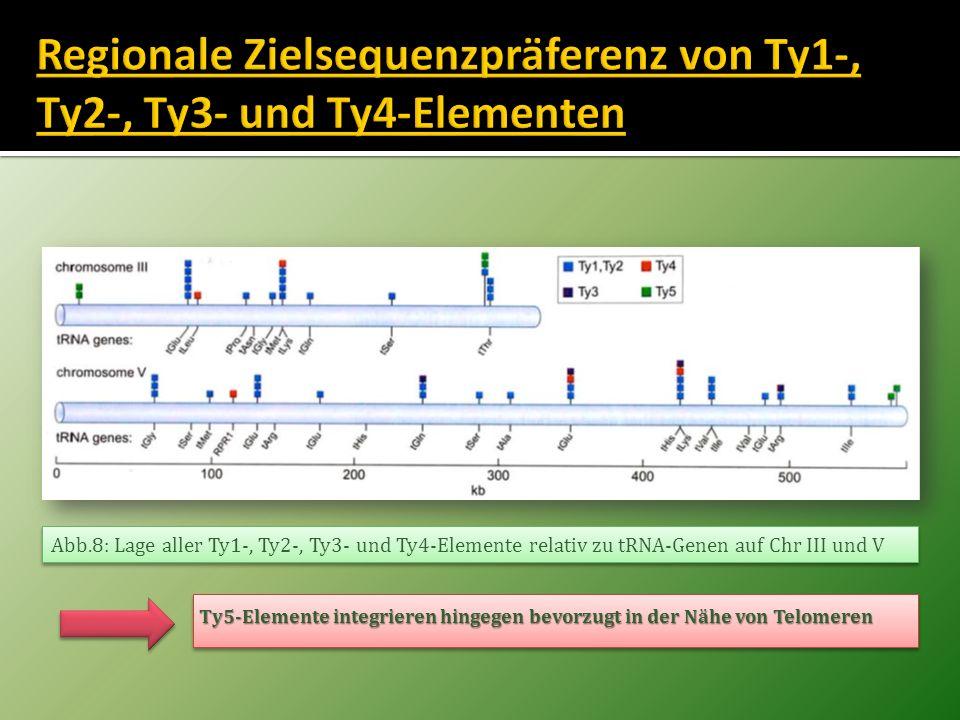Regionale Zielsequenzpräferenz von Ty1-, Ty2-, Ty3- und Ty4-Elementen