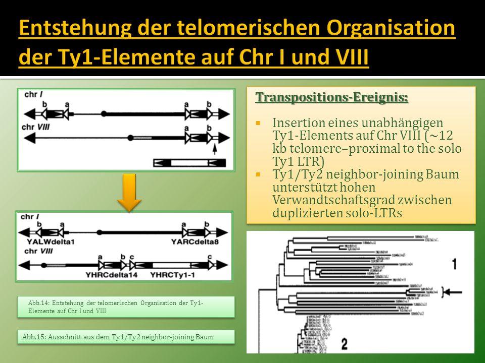 Entstehung der telomerischen Organisation der Ty1-Elemente auf Chr I und VIII