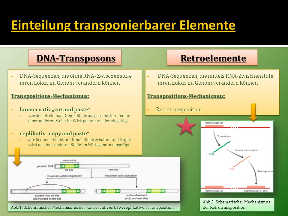Einteilung transponierbarer Elemente