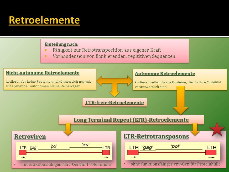 LTR-freie-Retroelemente Long Terminal Repeat (LTR)-Retroelemente