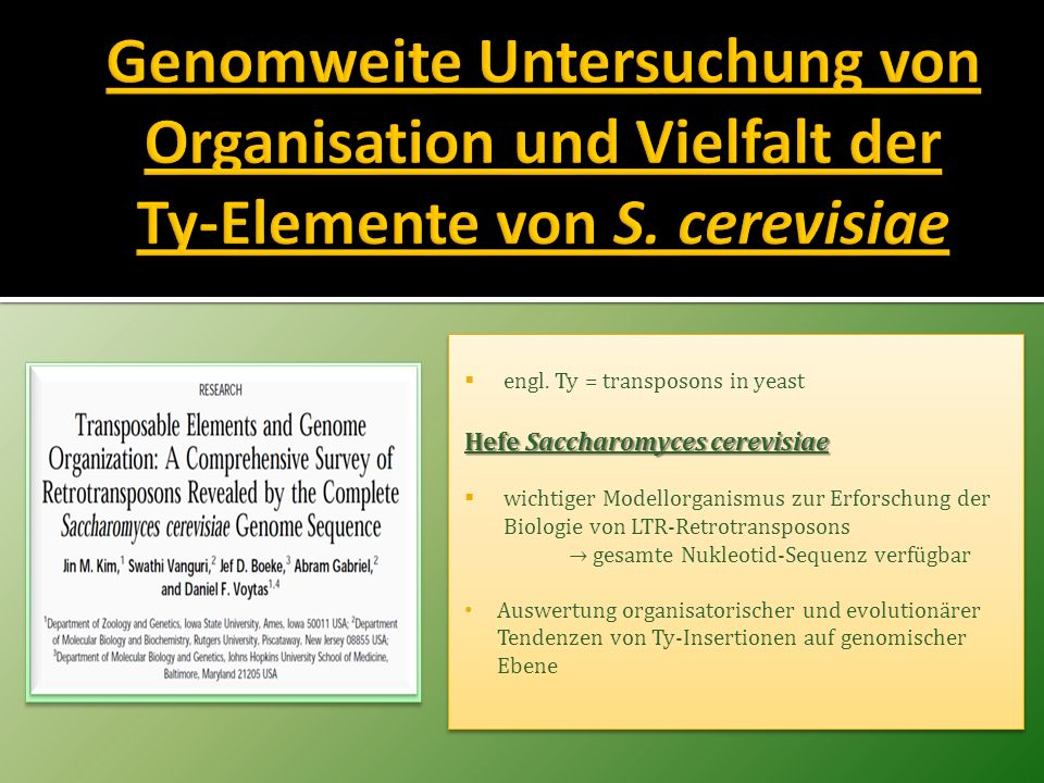 Genomweite Untersuchung von Organisation und Vielfalt der Ty-Elemente von S. cerevisiae