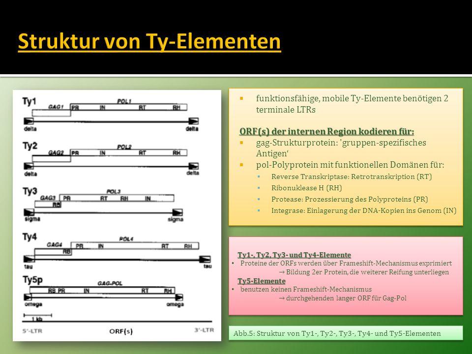 Struktur von Ty-Elementen