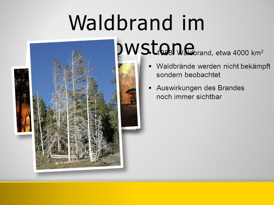 Waldbrand im Yellowstone