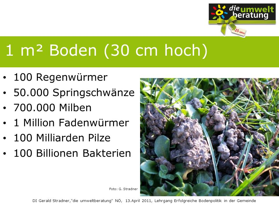 1 m² Boden (30 cm hoch) 100 Regenwürmer 50.000 Springschwänze