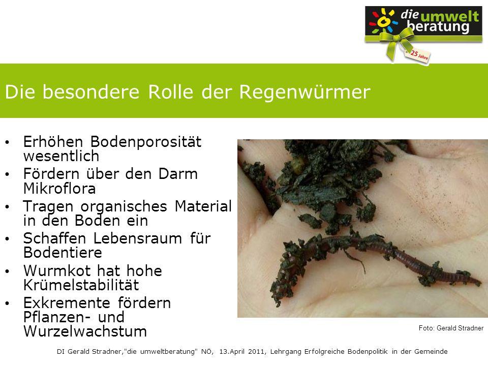 Die besondere Rolle der Regenwürmer