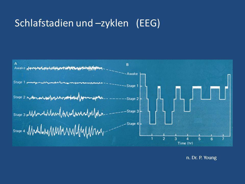 Schlafstadien und –zyklen (EEG)